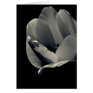 Tulp in Zwart-wit Wenskaart