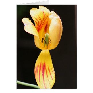 Tulpen Briefkaarten 0