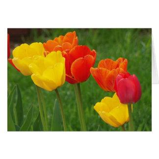 Tulpen Brights Kaart