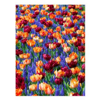 Tulpen en de Hyacinten van de Druif Briefkaart