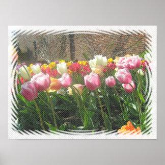 Tulpen in een Moestuin Poster