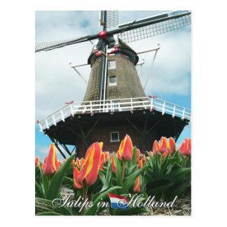 Tulpen in het Briefkaart van Holland