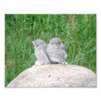 Twee babyvogels, beginnelingen, uilen foto