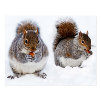 Twee Bezige het Eten van Eekhoorns Noten Briefkaart