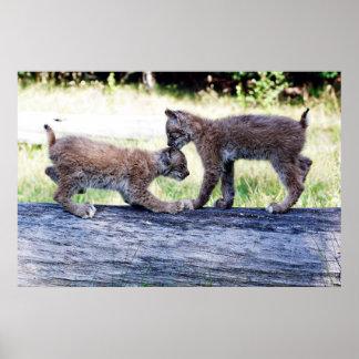 Twee Canadese Katjes die van de Lynx op een Logboe Poster