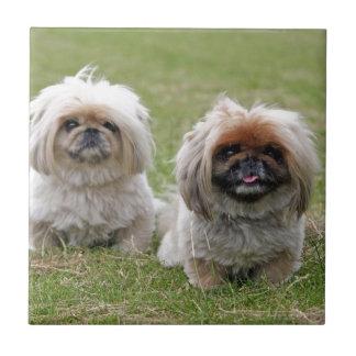 Twee Gelukkig Klein Puppy Keramisch Tegeltje