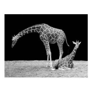 Twee Giraffen in Zwart-wit Briefkaart