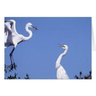 Twee Grote Aigrettes (alba Ardea) in een vrijage Briefkaarten 0