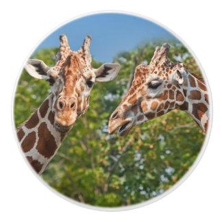 Twee het roddelen Giraffen Keramische Knop