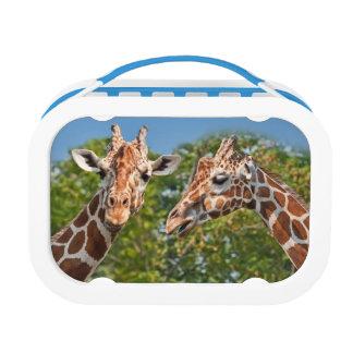Twee het roddelen Giraffen Lunchbox