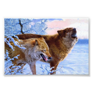 Twee het rode wolven schilderen foto
