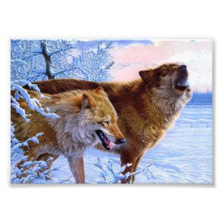 Twee het rode wolven schilderen foto afdruk