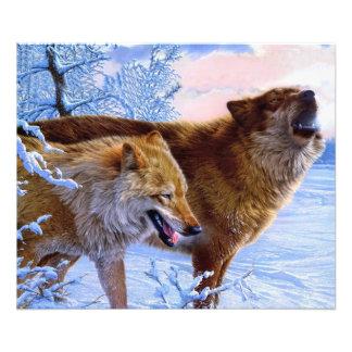 Twee het rode wolven schilderen fotoafdruk