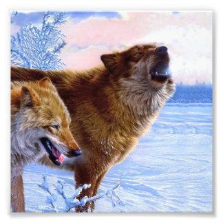 Twee het rode wolven schilderen fotografische afdruk