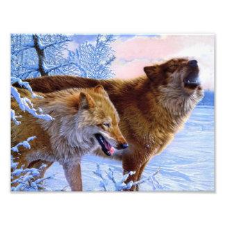 Twee het rode wolven schilderen fotoprints