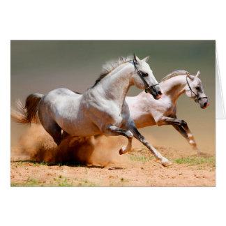 twee het witte paarden lopen briefkaarten 0