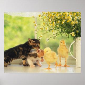 Twee Katjes en Twee Kuikens die, Vooraanzicht Poster