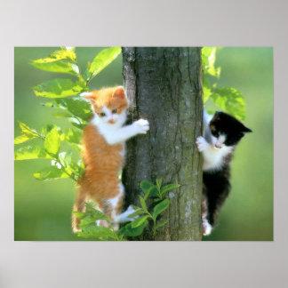 Twee Katjes in een Boom Poster