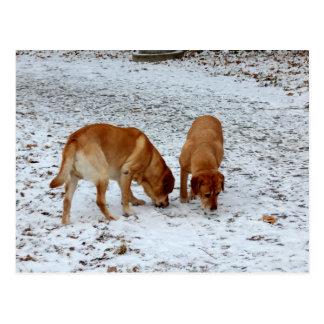 Twee Labradors Briefkaart