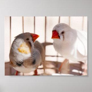 Twee Leuke Vogels van de Vink in Kooi Poster