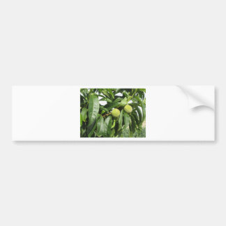Twee onrijpe groene perziken die op een perzikboom bumpersticker