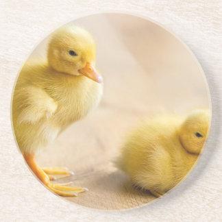 Twee pasgeboren gele eendjes op houten vloer zandsteen onderzetter