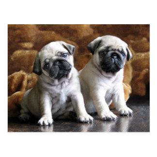 Twee Pugs Briefkaart