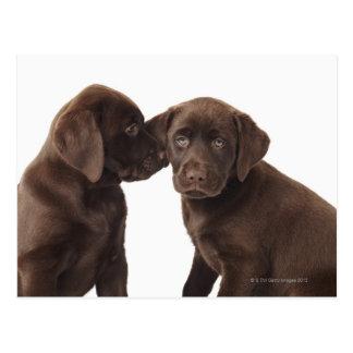 Twee Puppy van de chocoladeLabrador Briefkaart