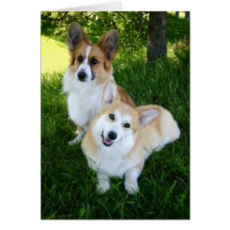 Twee Welse Corgis Briefkaarten 0