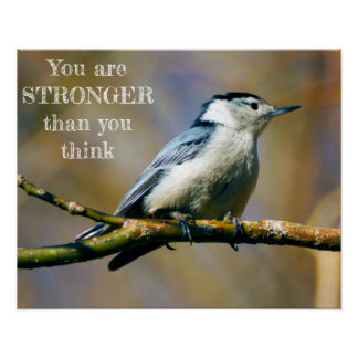 U bent Sterker Nuthatch wit-Breasted Poster