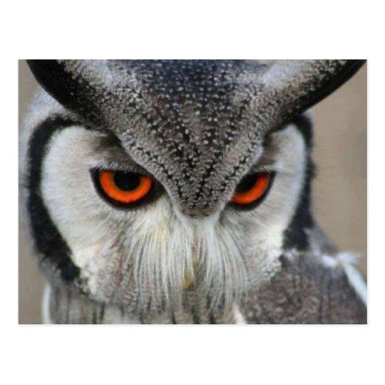uilen briefkaart