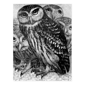 Uilen, vintage gravure briefkaart