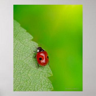 Uiterst kleine Dame Bug Poster