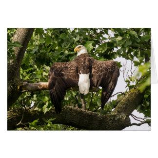 Uitgespreid Eagle Kaart