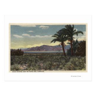 Uitzicht van Data die dichtbij het Zee Salton Briefkaart