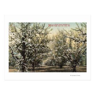 Uitzicht van een Boomgaard van de Gedroogde pruim Briefkaart