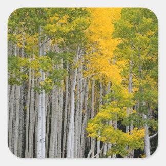 Utah. De V.S. De Bomen van de esp (Populus Vierkante Sticker