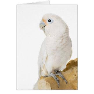 Van de de papegaaivogel van de kaketoe witte leuke kaart