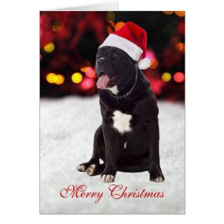 Van de hondsanta van Corso van het riet de Briefkaarten 0