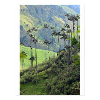 Van de palmenCocora van de was de vallei Colombia Briefkaart