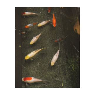 Van Nishikigoi (Vissen Koi) het Canvas