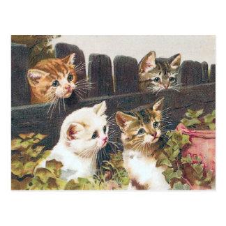 """Van """"vier Katjes"""" de Wijnoogst Briefkaart"""
