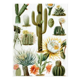 Various_Cactaceae Briefkaart