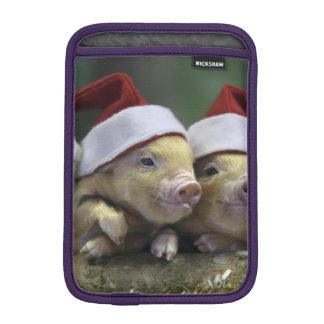 Varken de Kerstman - Kerstmisvarken - drie varkens