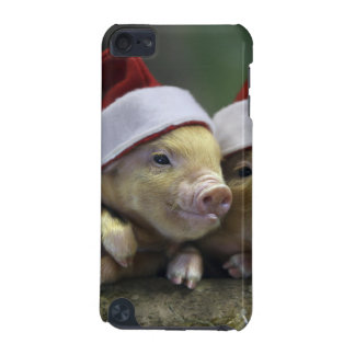 Varken de Kerstman - Kerstmisvarken - drie varkens iPod Touch 5G Hoesje
