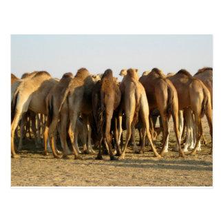 Vergadering van de Kamelen Briefkaart