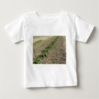 Vers basilicumplant die op het gebied groeien baby t shirts