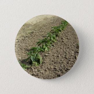 Vers basilicumplant die op het gebied groeien ronde button 5,7 cm