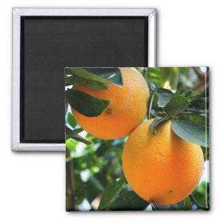 Vers Fruit - de Magneet van Sinaasappels