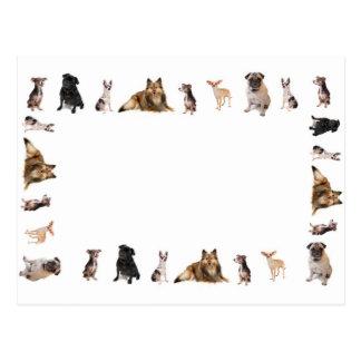 Verschillende hondenrassen in een rij briefkaart